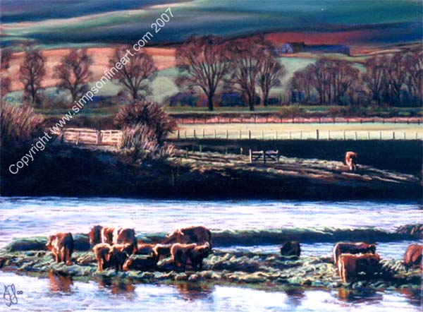 Cattle Grazing On The River Earn